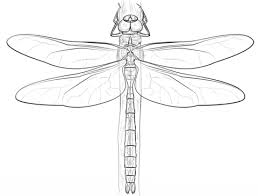 Small Picture Emperor Dragonfly coloring page Free Printable Coloring Pages