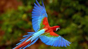 Free download hd Wallpapers 1080p Birds ...