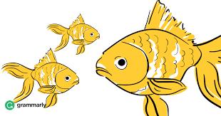 fish vs fishes