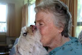 Forever friends: Janet Zehnder with her maltese terrier Soffie. - 6458749