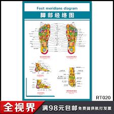 Buy Foot Foot Meridian Health Museum Of Human Meridian Chart