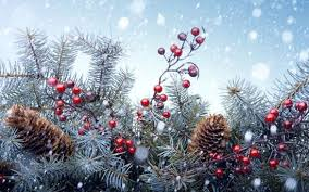 Image result for Winter holidays