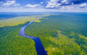 The Amazon rainforest is under threat: here's how you can help - Lonely  Planet