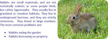 how do i keep rabbits out of my garden. Exellent Rabbits How To Keep Rabbits Away On Do I Out Of My Garden H