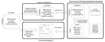 Flowchart Of The Functional Analysis On The Binarized