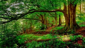 Forest Background Trees Tree Hd Nature Wallpapers View