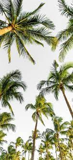 Best Palm tree iPhone 12 HD Wallpapers ...