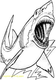 skill great white shark colouring pages sizable pictures free printable coloring