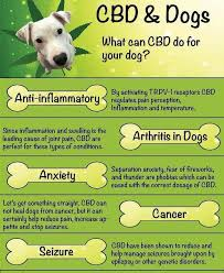 Hempworx Dosage Chart For Dogs Serving Size Instructions For Hempworx Cbd Oil For Humans