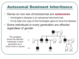 Patterns Of Inheritance Beauteous Patterns Of Inheritance