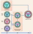 reassortant viruses
