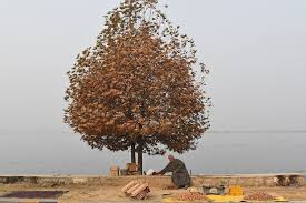 photo essay foreign policy a kashmiri vendor selling walnuts waits for customers on the banks of dal lake in srinagar