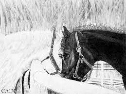 black horse painting black and white horses art print by william cain