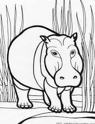 Hippo Coloring Pages For Kids At Getdrawingscom Free For Personal