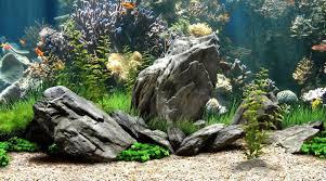 Fish Tank 12 Nature Aquarium Backgrounds Aquarium Fish Tank