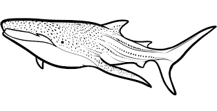 Small Picture coloring pages sharks printable 100 images free shark coloring