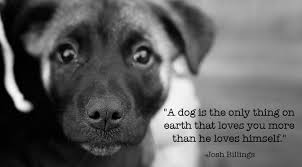 Quotes About Dogs Enchanting 48 Inspirational Quotes About Dogs That Will Make Your Day The Dog