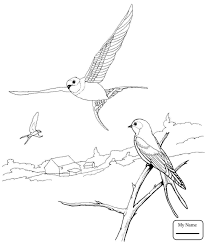 birds swallows Barn Swallow in Flight swallows coloring pages ...