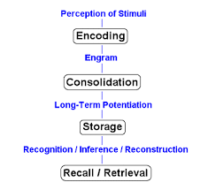 Long Term Memory Chart Memory Processes Types Of Memory In Psychology