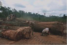 deforestation conclusion conclusion