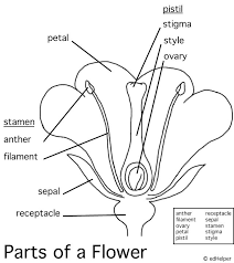 29205ce1c92ef7d5ca133d7534d0b6c7 plant science life science 219 best images about education grade 4 science on pinterest on structure of flower worksheet