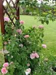 Подпорки для розы
