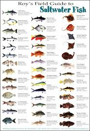 Saltwater Fish Fish Saltwater Fishing Fish Chart