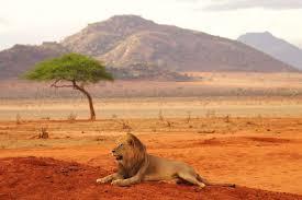 TOP 10 des Incontournables à Voir au Kenya