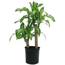 house plants. Mass House Plants A