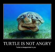 Turtle Quotes Turtle is not angry Turtle is disappointed in you Picture Quotes 17