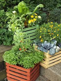container garden vegetables. Basil, Tomato, Cabbage, Chard, Calendula Container Garden Vegetables E