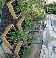 Diy tomato cage Stake Build The Best Tomato Cages Ever Instructables Build The Best Tomato Cages Ever Steps with Pictures