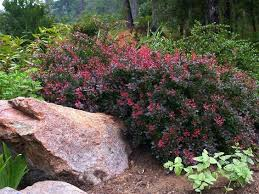 Small Picture 510 best Landscaping ideas images on Pinterest Landscaping ideas