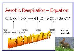 write a balanced chemical equation for cellular respiration