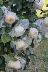 Protecting Your Homegrown Harvest  VISITvortex  MAGAZINE  ARTICLESHow To Protect Your Fruit Trees From Squirrels