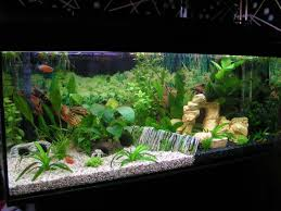 diy fish tank decorations