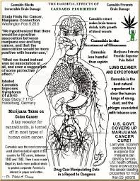 best images product page medical marijuana and learn marijuana cannabis