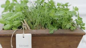 Small Picture Homelife How To Grow A Herb Garden From Seeds
