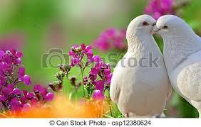 beautiful purple and white flowers. Plain Purple Two Loving White Doves And Beautiful Purple Flowers  Csp12380624 With Beautiful Purple And White Flowers