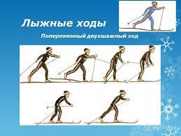 Презентация на тему Классификация лыжных ходов Лыжи появились в  5 Лыжные ходы Попеременный двухшажный ход