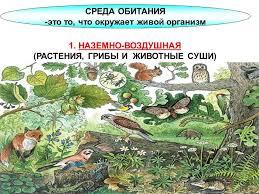 Презентация на тему Тема урока Многообразие организмов среды  4 СРЕДА ОБИТАНИЯ это то что окружает живой организм 1 НАЗЕМНО ВОЗДУШНАЯ РАСТЕНИЯ ГРИБЫ И ЖИВОТНЫЕ СУШИ