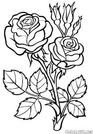 Fiori Da Colorare Per Bambini Rose Disegni Di Fiori Da Colorare E