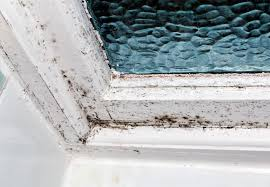 how to remove black mold homeowner s