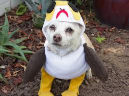 trick or star wars treat dress your pet as a porg and more diy howl o ween costumes