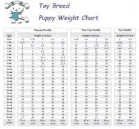 Poodle Height And Weight Chart How Labrador Puppy
