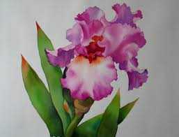 leaning iris watercolor sold