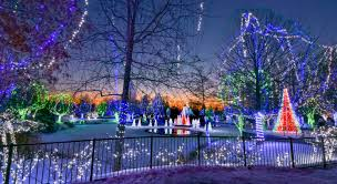 Columbus Ohio Tree Lighting Wildlights
