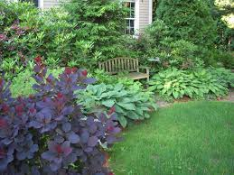 Small Picture smoke bush hosta Landscape ideas Pinterest Evergreen