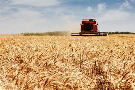 Сельское хозяйство Украины накануне продовольственного кризиса  Сільське господарство України напередодні продовольчої кризи