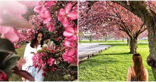 ontario cherry blossom spots that you